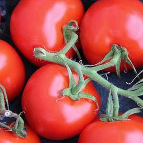 עגבניות שדה אורגניות